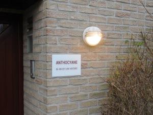 Anthocyane