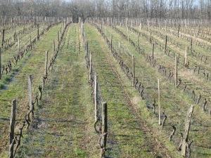 vignoble de la Colombière