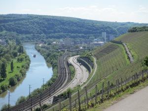 Le vignoble du Stein (Würzburg, Franconie, Allemagne, en bord de Main)
