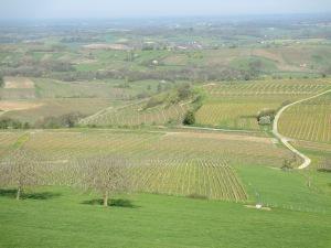 le vignoble, fin avril