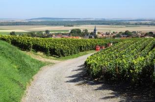 vignes à Cormicy