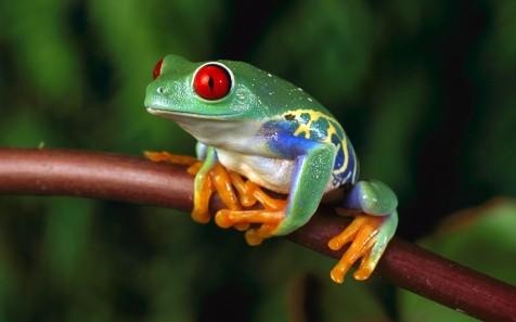 grenouille 1